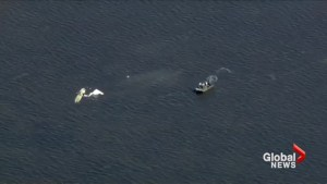 Rescue workers recover plane wreckage from Roy Halladay crash