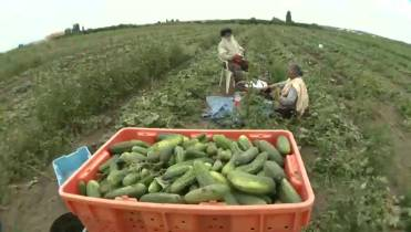 Vancouver Island farmers complain about changes to
