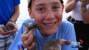 Edmonton teen collects raises money to help turtles in Mexico