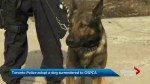 Puppy surrendered to Ontario SPCA becomes a Toronto police dog