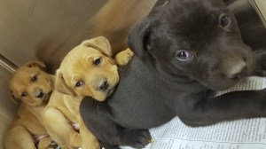 10 puppies rescued from under abandoned Detroit home by Michigan Humane Society
