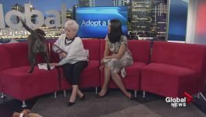 Adopt a Pet: Eva the Labrador Retriever