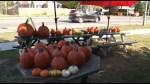 Selling pumpkins for the Brock Mission