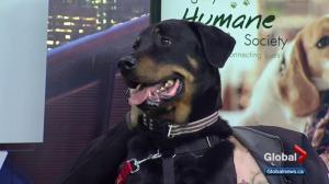 Calgary Humane Society Pet of the Week: Ben