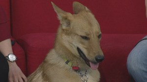 Adopt a Pet: Foxy looking for a home