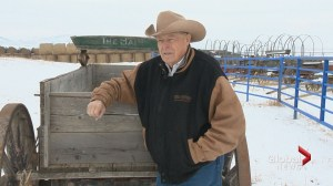 Alberta rancher recognized by Calgary Stampede for decades of community service