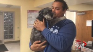 Pets reunite with their owners after California wildfires