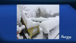 A snow day in May for parts of Newfoundland