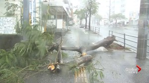 Powerful Typhoon Trami rips through Japan
