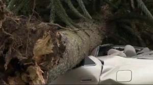 Dangerous winds hit B.C. South Coast