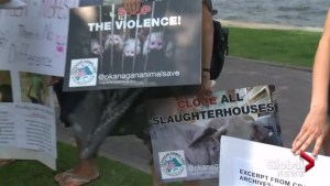 Animal rights activists protest Kelowna Ribfest event