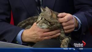 Edmonton Humane Society: Nevada & Leopold