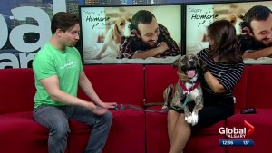 Calgary Humane Society Pet of the Week: Harley Quinn