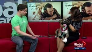 Calgary Humane Society Pet of the Week: Harley Quinn