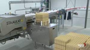 Siemens Farms: How eggs are collected