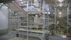 Siemens Farms: Advancements in farming