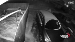 Video captures man wandering near vehicles in Edmonton alley
