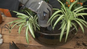 GardenWorks spooky planter