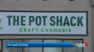 Cannabis supply shortage predict to improve by the new year