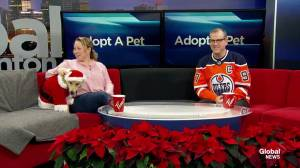 Adopt A Pet: Bella and Sock