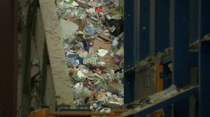 Recycling 101: common misconceptions on your recycling habits