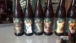 N.B. brew helps find homes for shelter animals