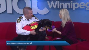 Adopt a Pal: Winnipeg Animal Services