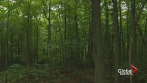 Beaconsfield buys part of Angell Woods