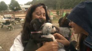 U.S. animal rescue group rescues 300 dogs, cats from Caribbean islands