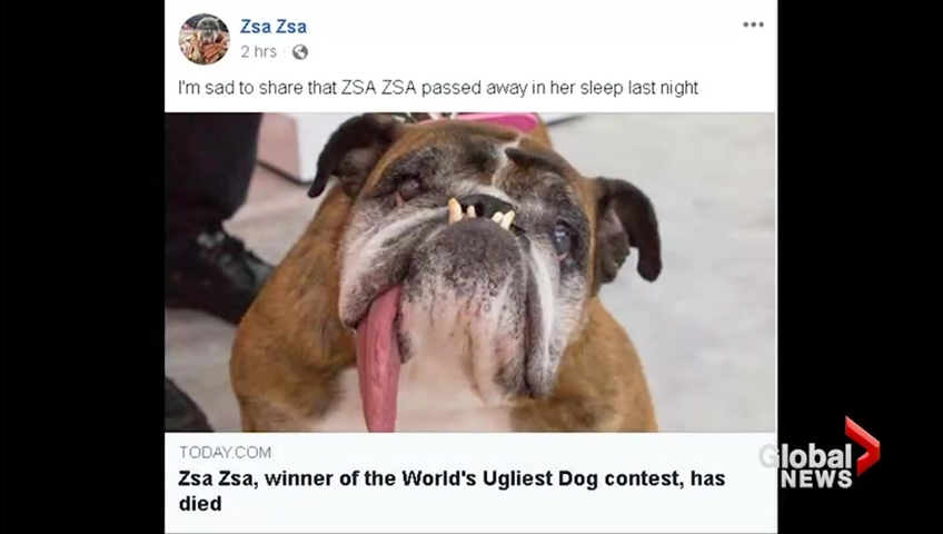 Recently-crowned World's Ugliest Dog dies