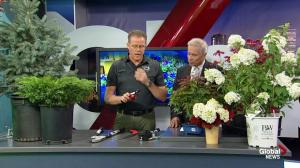 Classic Landscaping: What tools to use for pruning plants