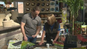 Get Gardening with Global News Morning- Seeding