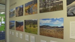 The Nature in Focus exhibit at the Penticton museum is comprised of nature shots taken by local amateur photographers