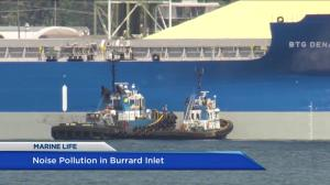 Monitoring noise pollution in Burrard Inlet to protect marine life