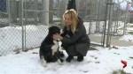 Adopt a Pet: Jessie