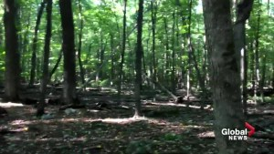 West Island mayors celebrate protection of Angell Woods