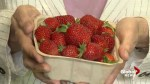 Nutritional benefits of strawberries