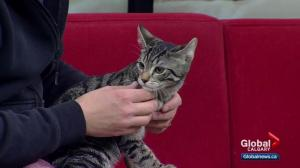 Calgary Humane Society Pet of the Week: Harold and Kumar