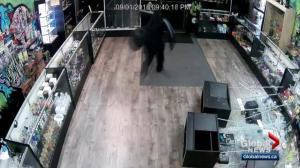Edmonton cannabis paraphernalia store targeted by vandal
