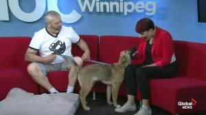 Adopt a Pal: Manitoba All Shepherd Rescue (04:22)