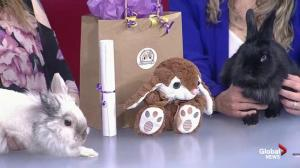 Adopt a Pal: Popcorns and Binkies Rescue Haven