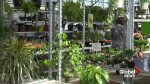 Lethbridge greenhouse credits warm weather for spike in business