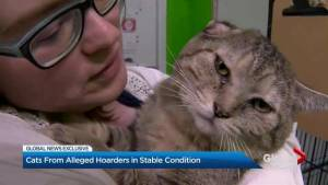 Cats from alleged Toronto hoarders suffering from various ailments (01:53)