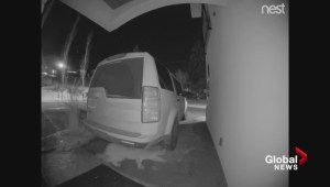 Doorcam video of cougar slinking through B.C. carport