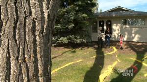Calgary woman wages battle with city hall over what she calls dangerous tree