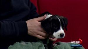 Calgary Humane Society Pet of the Week: Lisa