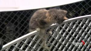 Cause for Paws telethon raises $25K for Saskatoon SPCA