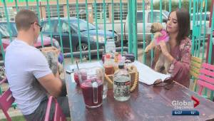 2 eateries just off Whyte Avenue open their patios to dogs