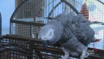 Surrey sanctuary still caring for dozens of parrots