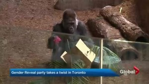 When it comes to gender reveal parties, Toronto Zoo revealed a surprise